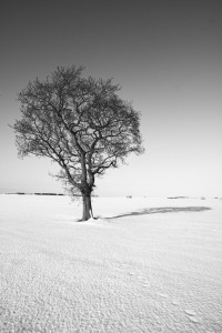 Single tree on snow field Northumberland-Prof Ian Purves-20130126-1136-3