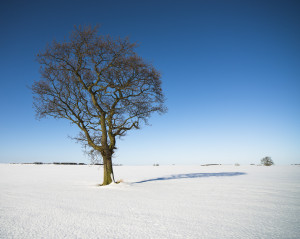 Single tree on snow field Northumberland-Prof Ian Purves-20130126-1137