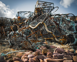 Lobster-Pots-at-Cove